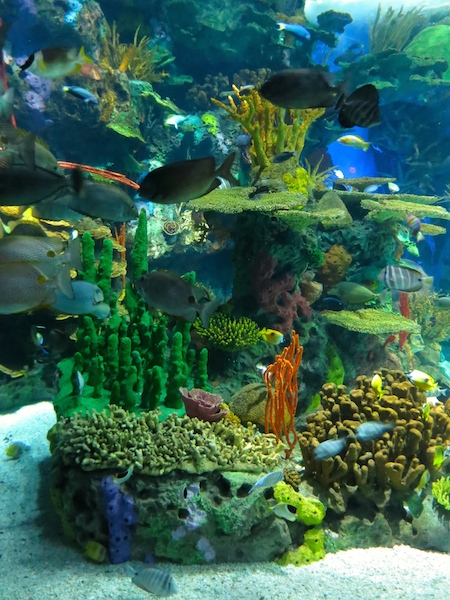 Travel guide Toronto Ripley's Aquarium of Canada