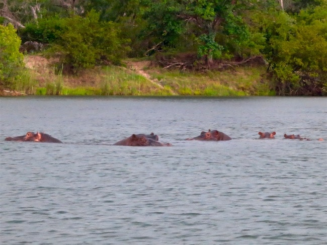 Victoria Falls view of hippos from Royal Livingstone Hotel