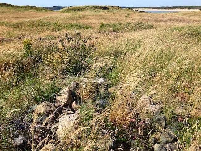 Holy well of St Dwynwen on Llandwyn Island