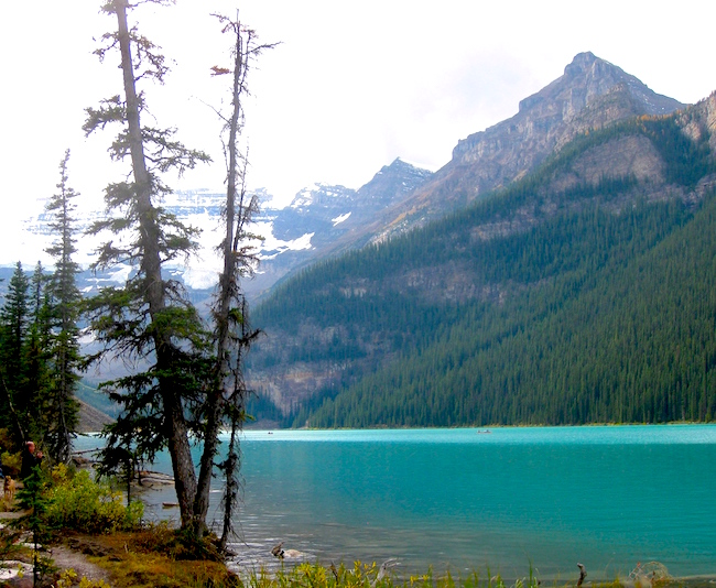 Lake Louise view with mountains and pines