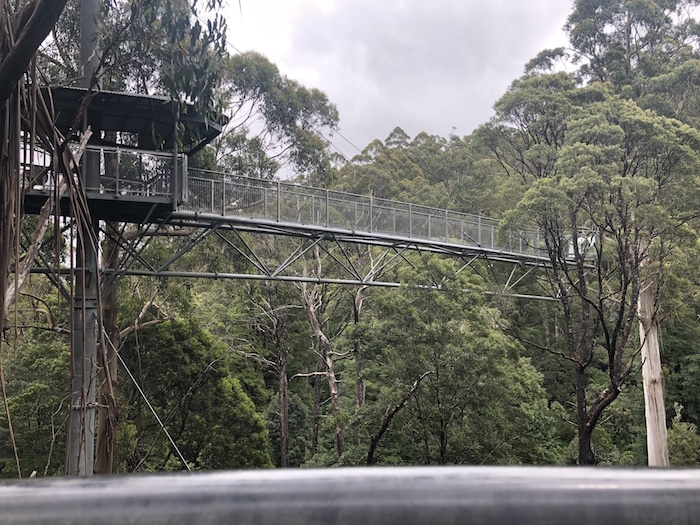 Things to do on the Great Ocean Road include doing the Cape Otway National Park Treetop Walk