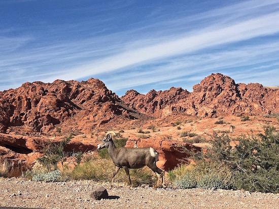 Outdoor Activities in Las Vegas Valley of Fire