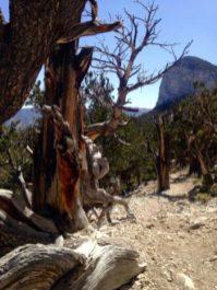 Outdoor Activities Near Vegas Mummy Springs Hike