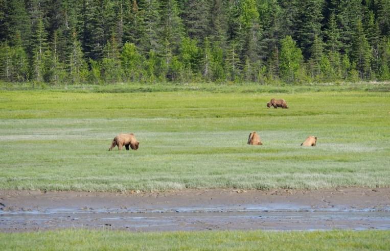 Chinitna Bay Lake Clark Bear Viewing
