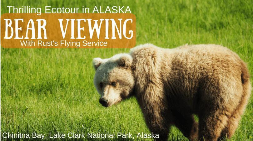 Alaska Brown Bear Viewing Ecotour – Chinitna Bay