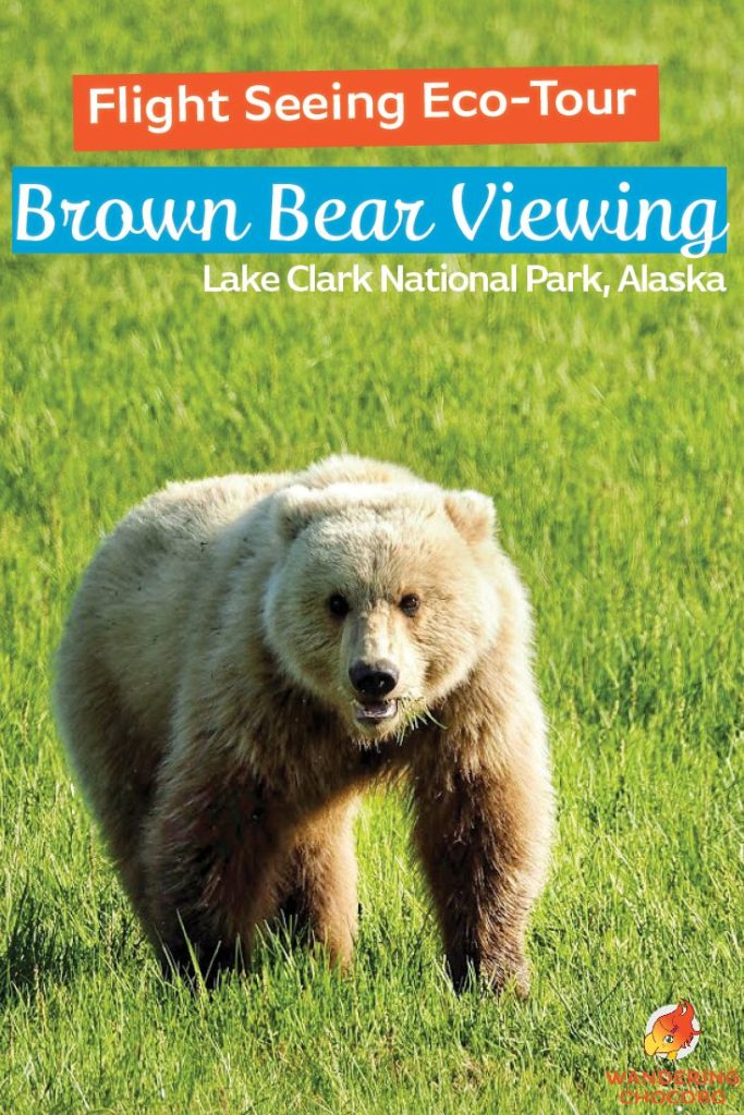 Flight Seeing Eco Tour Bear Viewing