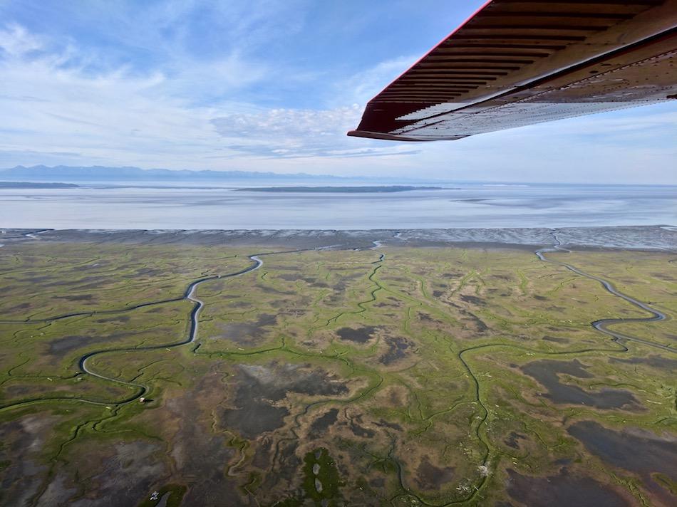 cook-inlet-anchorage-alaska-bear-viewing