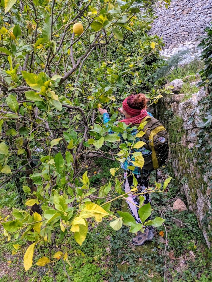 Picking lemons in Samos, Greece. Volunteering in a refugee camp.