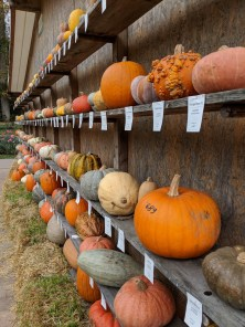 Pumpkin display at the world's largest pumpkin festival in Germany
