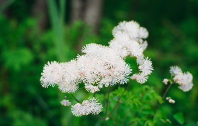 Murnauer Moos Marshland flowers