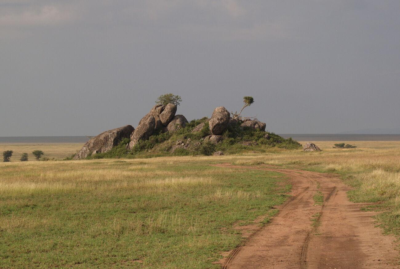 Serengeti Looking For Cats Tanzania Safari Travelogue