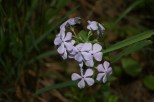 More Wildflowers on Woodpecker Trail