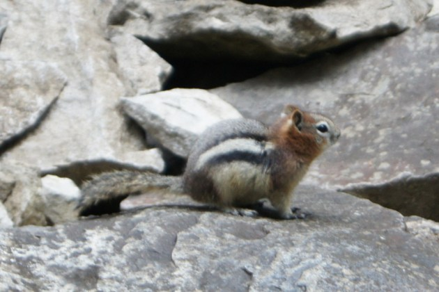 We passed this chipmunk on the way to the waterfall