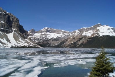 Bow Lake was still covered with a lot of ice