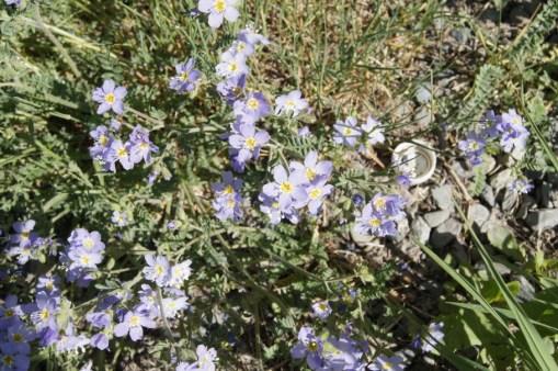 Yukon wildflowers