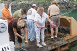 Joyce and crew cleaning crabs on the dock