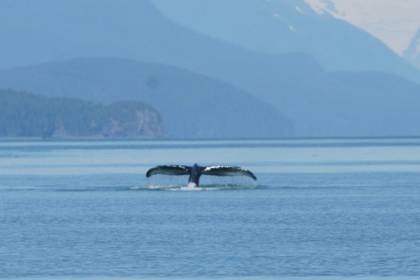One last whale tail