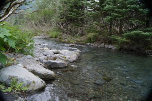 No salmon in the creek yet