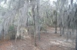 View out back window Little Ocmulgee site 35, January, 2013
