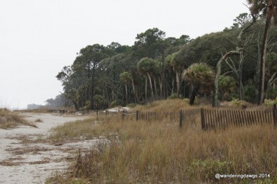 Dunes in front of the Hunting Island, SC Lighthouse