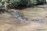 Stream on the Blue Ridge Parkway in Virginia