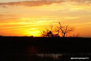 Yellow sky at sunset