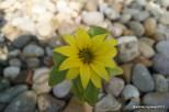 Flower in the rocks