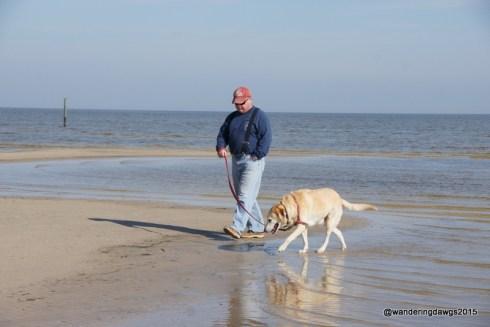 Blondie always enjoys a walk on a beach