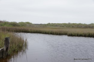 The marsh reminds me of home