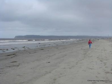 Dog Beach in Coronado
