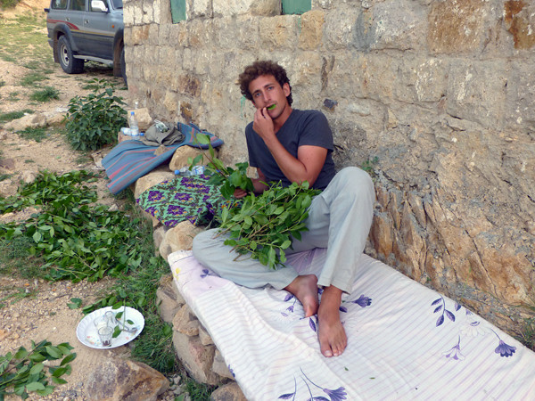 Chewing Qat in Yemen 5