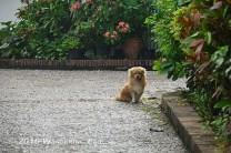 20110913_hey-dog