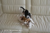 20111102_crazy-dogs-ari-and-wenis