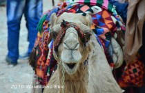 20140405_that-s-a-tired-camel