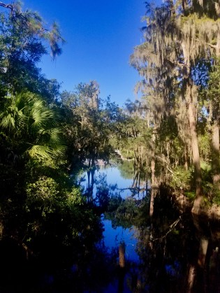 View of shingle creek with trees and palmettos on each side, reflecting in the water.