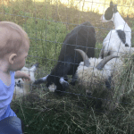 time management tips for homesteading with kids from time blocking, to bullet journaling, baby wearing and delegating. It's still possible to get it done with kids.