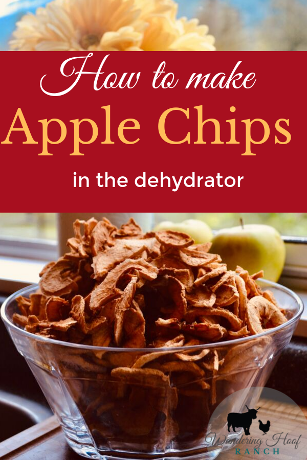 Dehydrated Apple Chip recipe. Super easy how to guide for making your own apple chips at home. Apple chips are a healthy, frugal snack for the whole family.