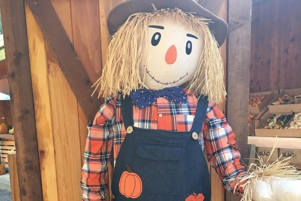 MAKE A FALL SCARECROW ONE OF THE 91 festive fall activities to do with the whole family. Frugal or free fun things to do together to make the most of the autumn season.