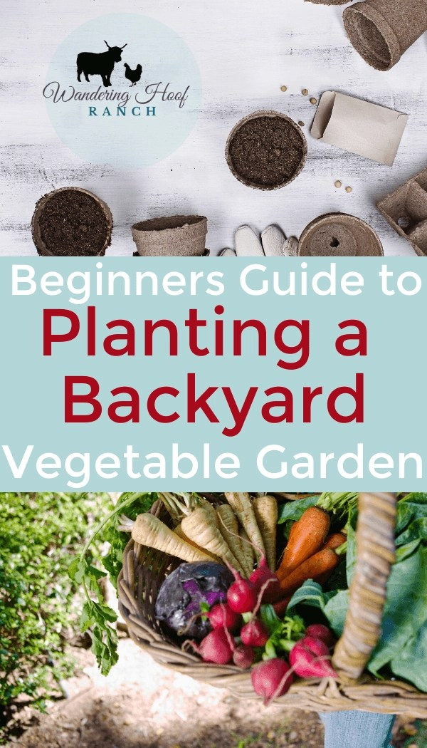 Beginners Guide to Planting a Backyard Vegetable Garden