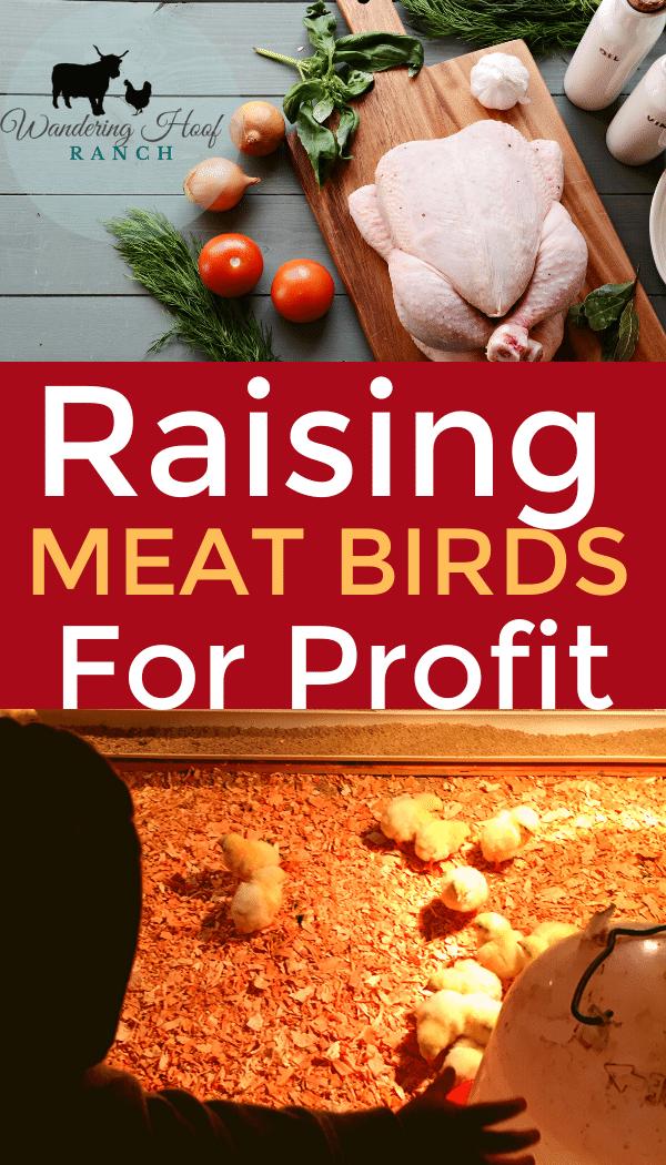 Raising meat birds for profit pin