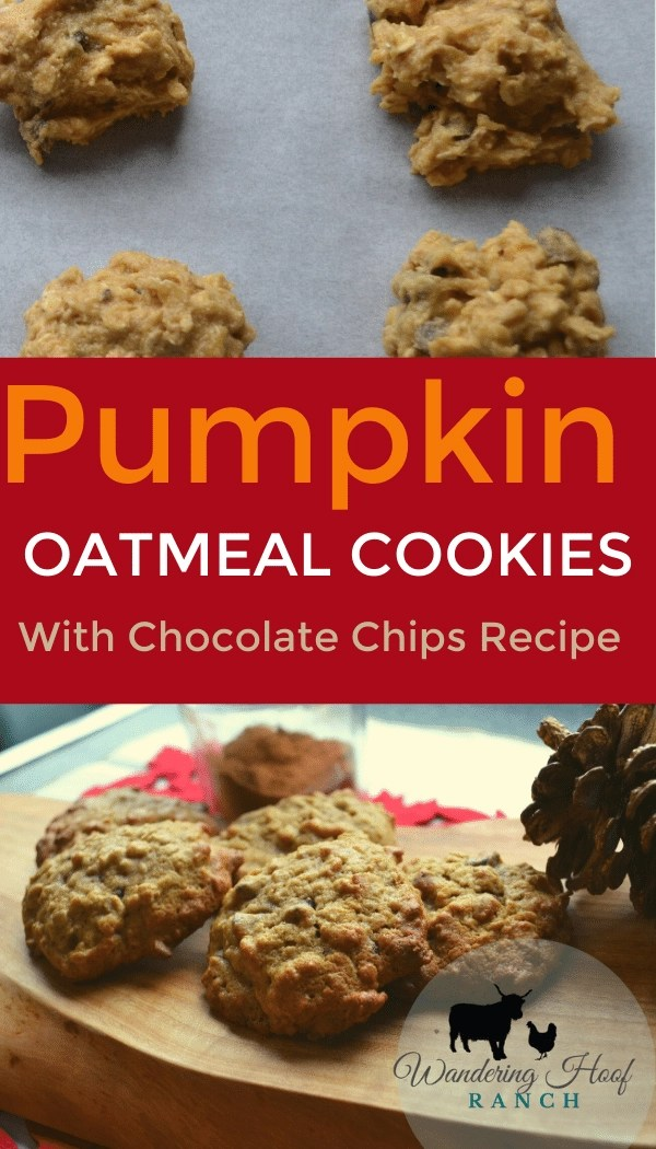 pumpkin oatmeal cookies with chocolate chips recipe