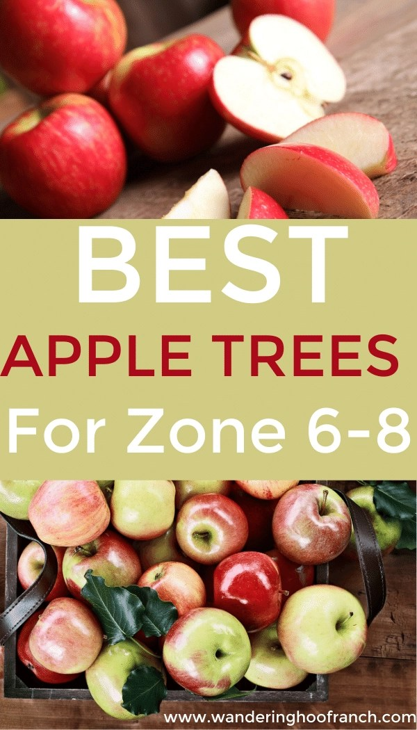 best apple trees for zone 6-8 pin