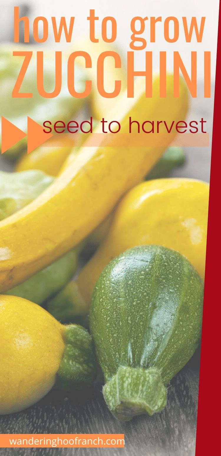 green and yellow zucchini, how to grow from seed to harvest