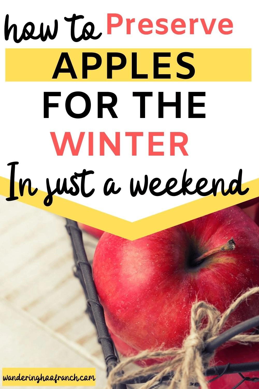 apples in colander pin image