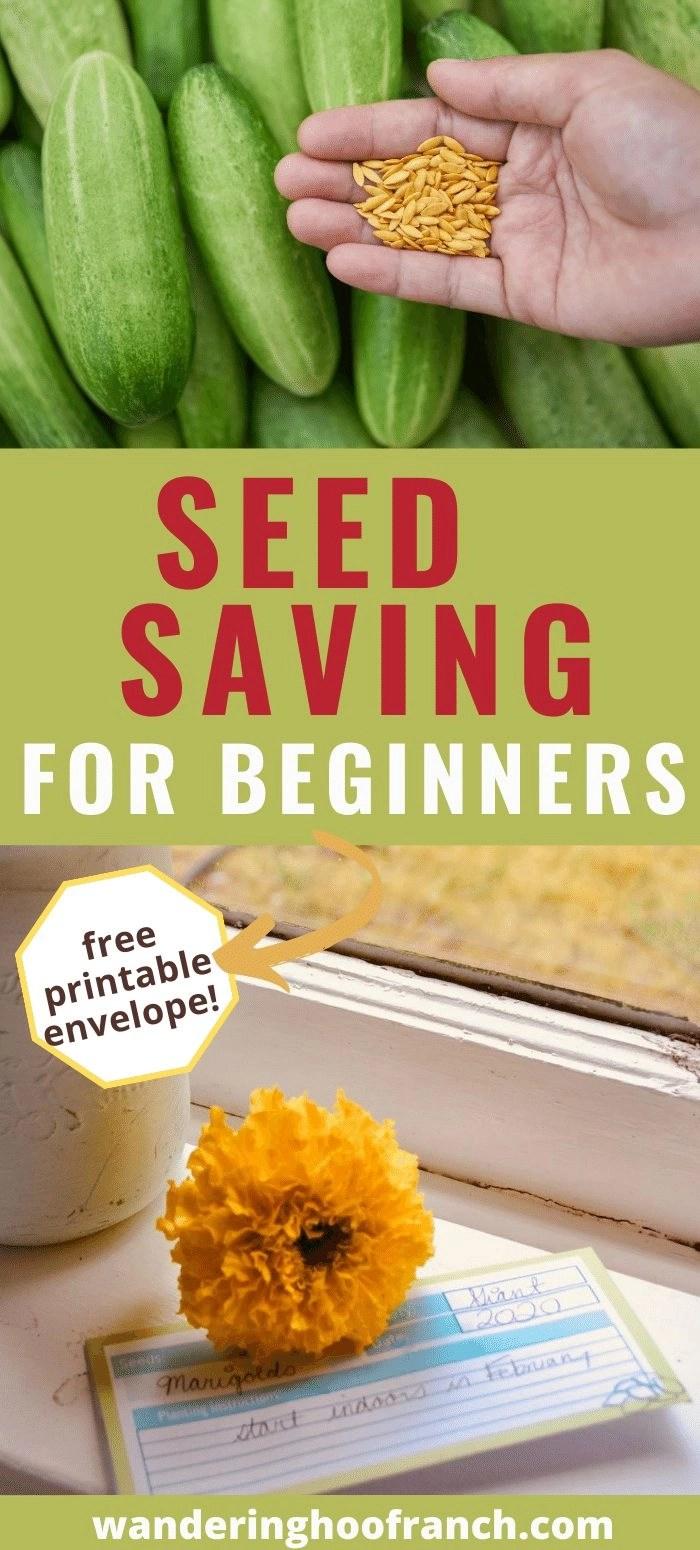 seed saving for beginners pin