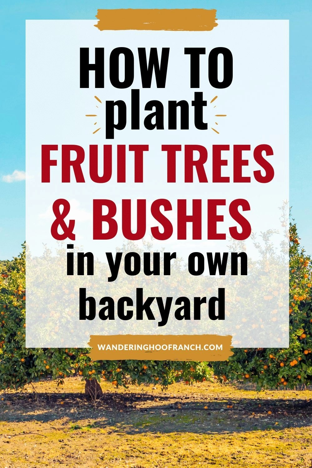 how to grow fruit trees and bushes in your own backyard small fruit orchard image with text overlay