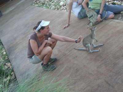 An orphaned young wallaby charms visitors at The Didgeridoo Hut