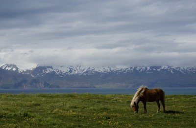 Husavik, Iceland, horse