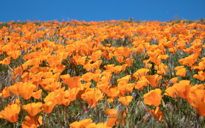 10 Best Destinations for Spring Wildflowers in the US