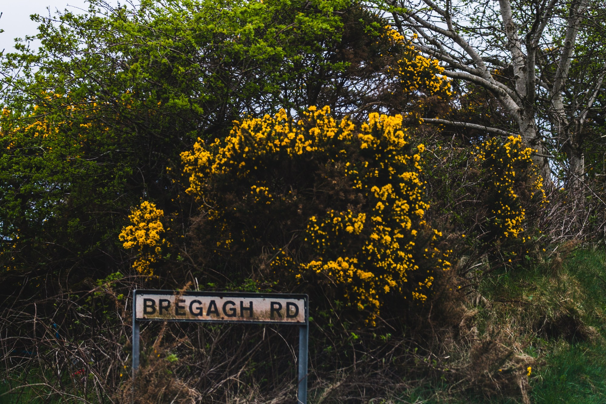 road sign with flowers